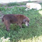 Oreo and Molly